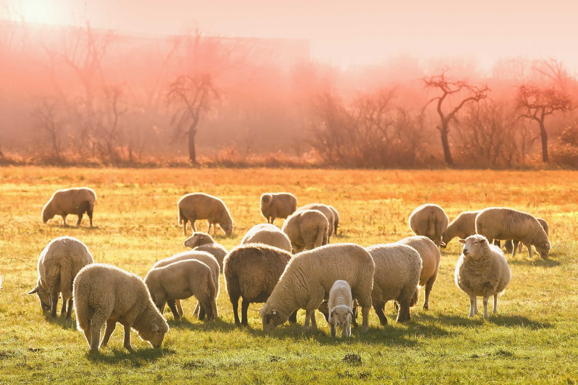 when the dung adds up